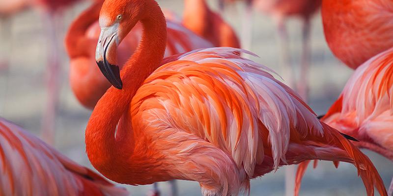 BVI Itineraries Anegada-Flamingos