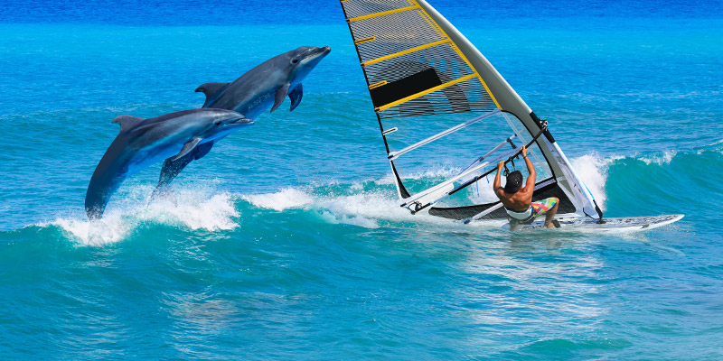 BVI Itineraries -Windsurfing with dolphins