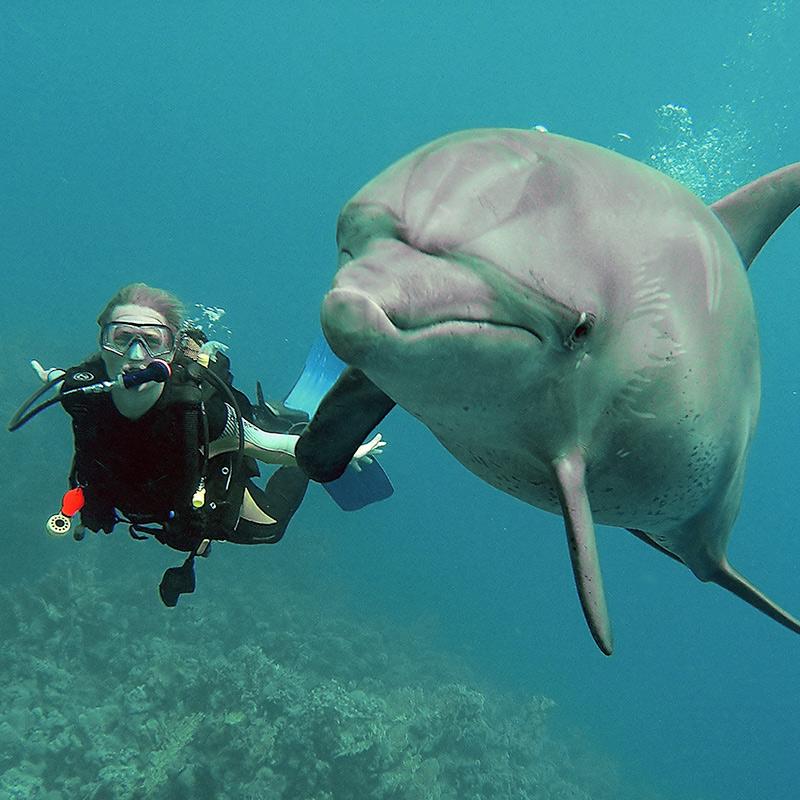 CruiseNautic -Dolphin