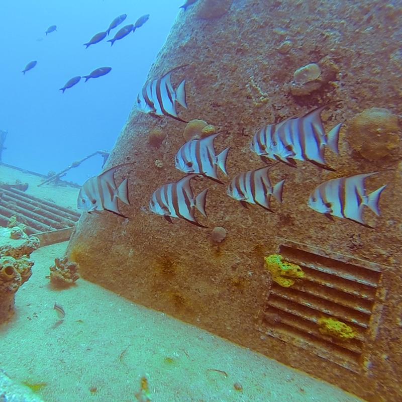 Angelfish - Deep Wrecks - CruiseNautic