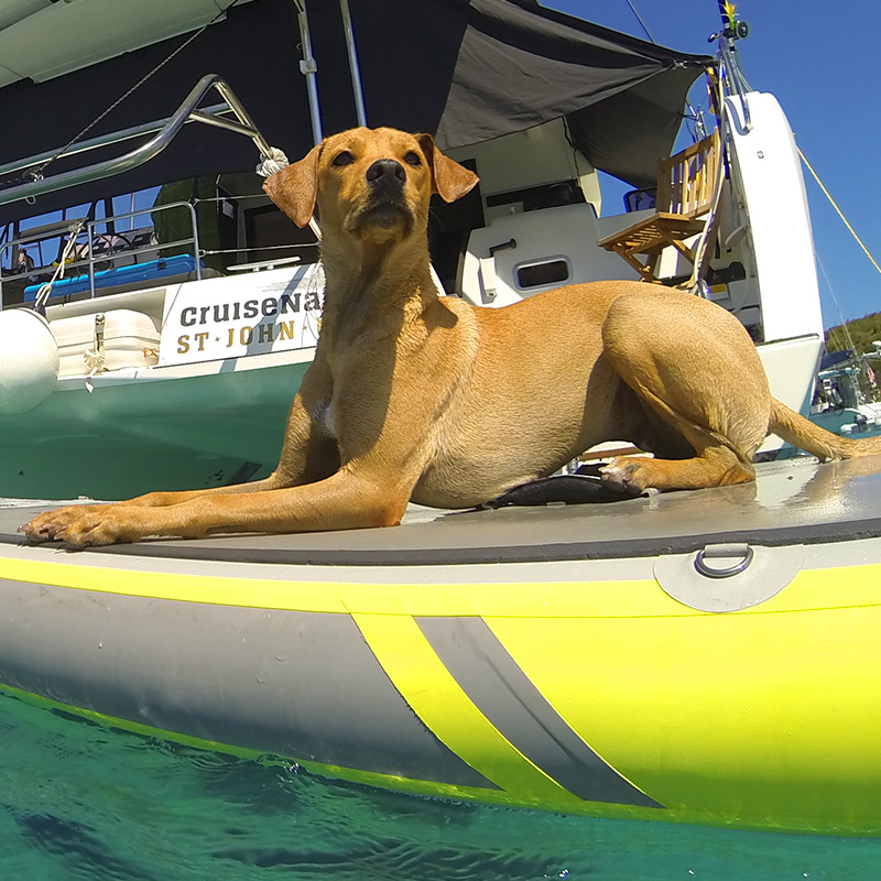 CruisNautic Paddling Pup - Cocoa Salty Paws